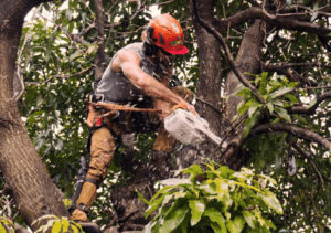 Tree Trimming Adelaide