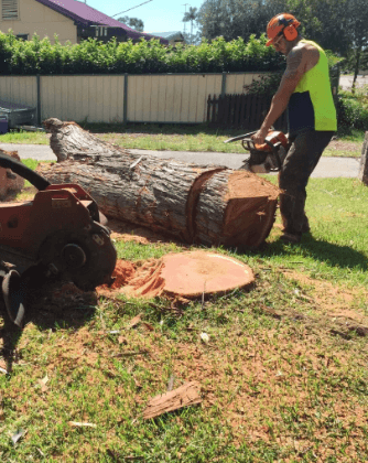tree services Adelaide